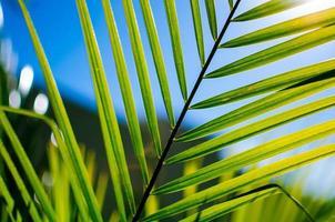 palmvarenblad foto