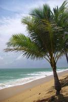 kokospalm op het strand, thailand foto