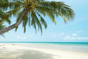 mooie kokospalm bij het tropische strand, thailand foto