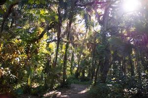 onverharde weg in tropisch florida foto