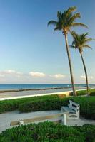 strand en park met kokospalmen