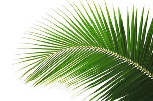 palm foto
