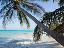 palm op een strand foto