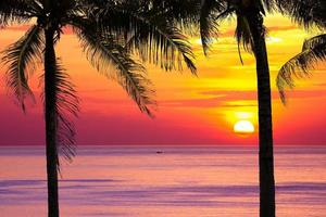 silhouet kokospalm bij zonsondergang