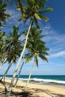 Tangalle-strand in Sri Lanka foto