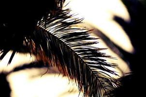 zonnestraal komt door palmbladeren foto