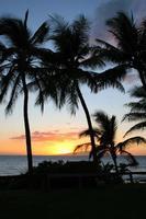 palmbomen in maui zonsondergang foto