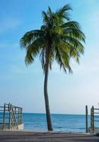 zee en kokospalm foto