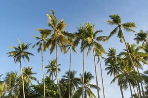 palmbomen op het strand foto