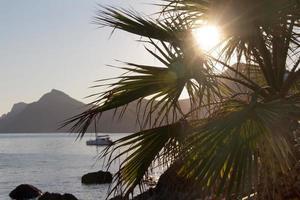 tussen zee en palmbomen zonsondergang