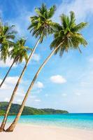 tropisch wit zand met palmbomen foto