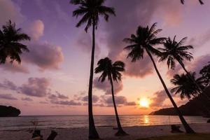 silhouet van kokospalm foto