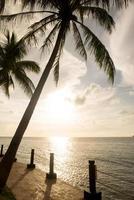 palmboom silhouet en tropische zonsondergang foto