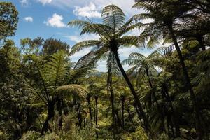 gigantische zwarte boomvarens foto