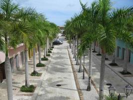 vías entre palmeras foto