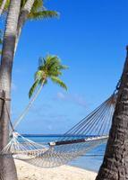 hangmat tussen palmbomen en de zee foto