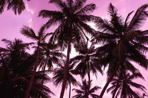 twee palmbomen silhouet op zonsondergang strand