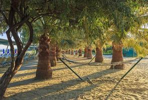 palmbomen en hangmatten op het strand foto