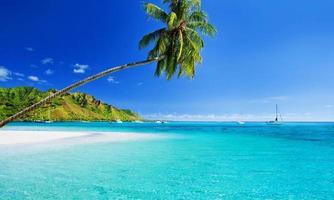 palmboom die over lagune met steiger hangt foto