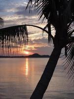 tropische eilandzonsondergang met een kokospalmboomsilhouet foto