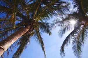zonneschijn mexico foto