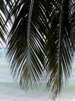 haïti, jacmel, kustlijn, caribische zee. foto