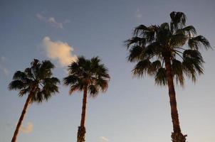 palmen foto