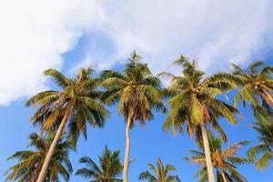 kokospalmen bij men beach, nam du island, vietnam foto