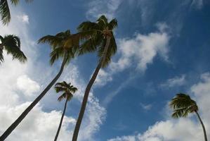 opzoeken in het paradijs foto