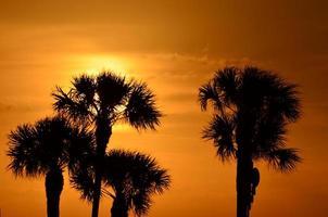 zonsopgang en palmen foto