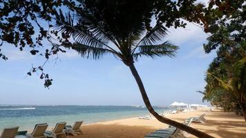 kokospalm op het strand van Sanur foto