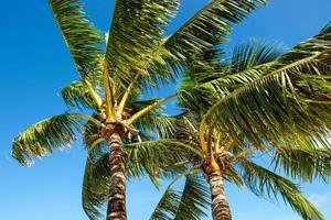 palmen waaien in de wind foto