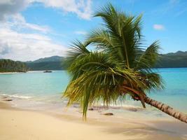scheve palmboom bij Rincon Beach, schiereiland Samana foto