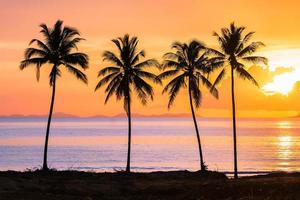tropische zonsondergang met palmbomen silhouet bij strand