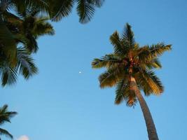 palmbomen op het strand van las terrenas, schiereiland samana foto