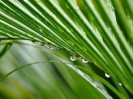 regendruppels op blad foto