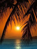 zonsondergang met palmbladeren. foto