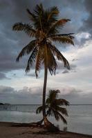 kokospalmen op het strand foto