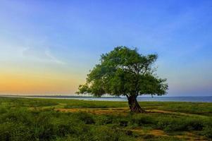 schoonheid van Sri Lanka