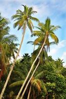 tropisch strand met palmboom en zand foto