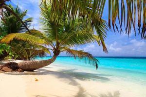 omgevallen palmboom op een strand van de Maldiven foto