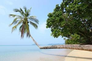 enkele kokosnootboom foto