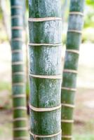 palmbomen foto