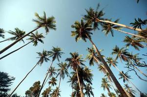 kokospalmen. foto
