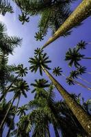 palmbomen 1 foto