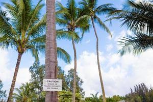 pas op voor vallende kokosnoten teken foto