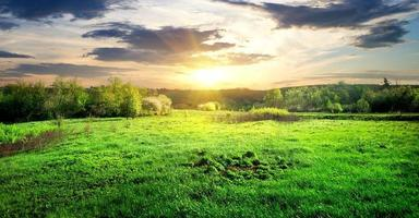groen gras en bomen foto