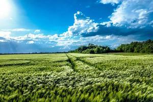 het groene veld foto