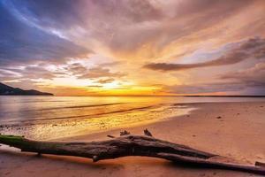 dode boomstam op tropisch strand foto