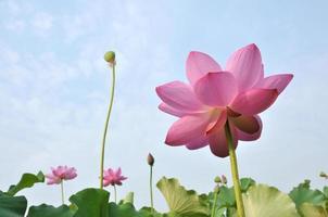 schoonheid in de natuur foto